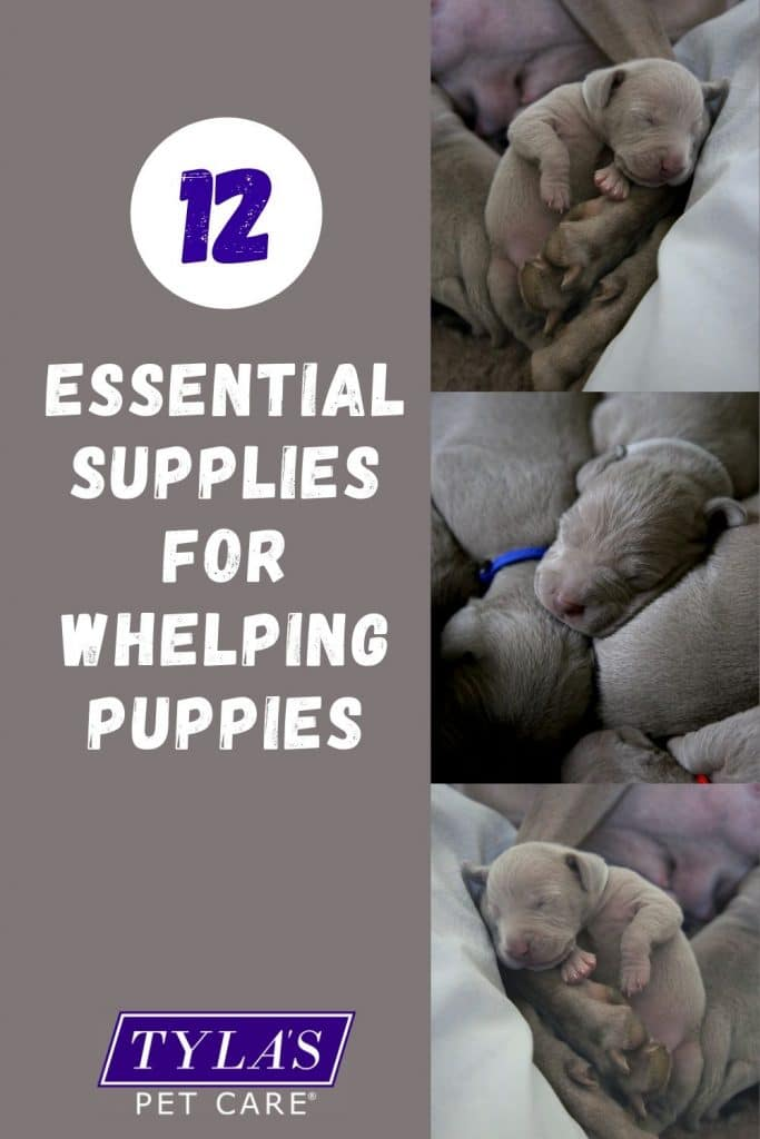 12 Essential Supplies For Whelping Puppies