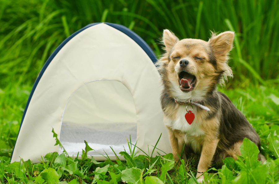 Tent for Dogs