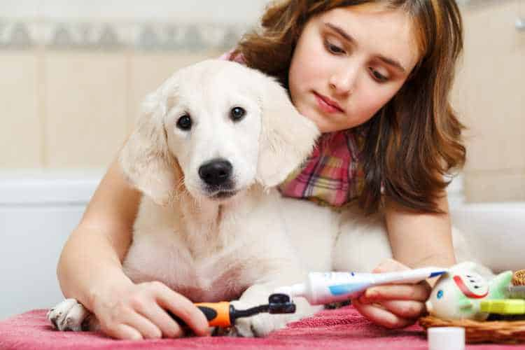 Dental care products for dogs
