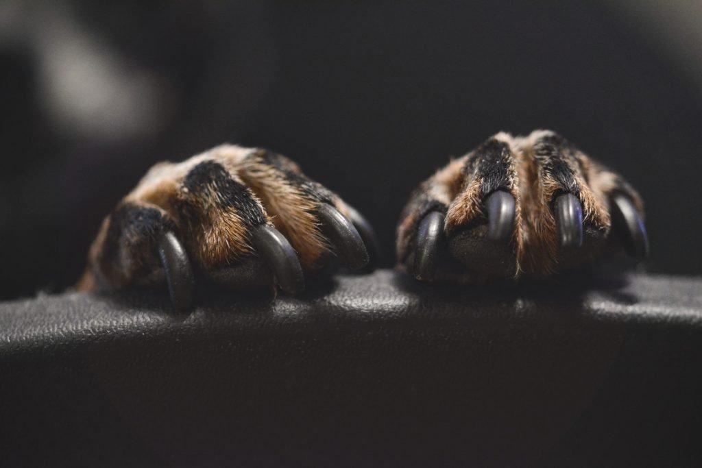 5 Best Dog Nail Grinders