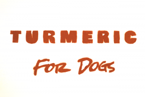 The benefits Of Turmeric For Dogs