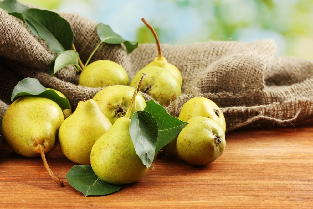 pears for dogs