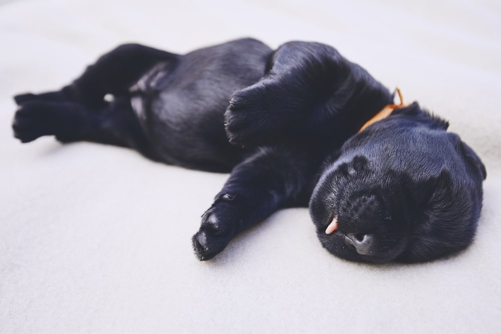 How Much Sleep Should A Puppy Get