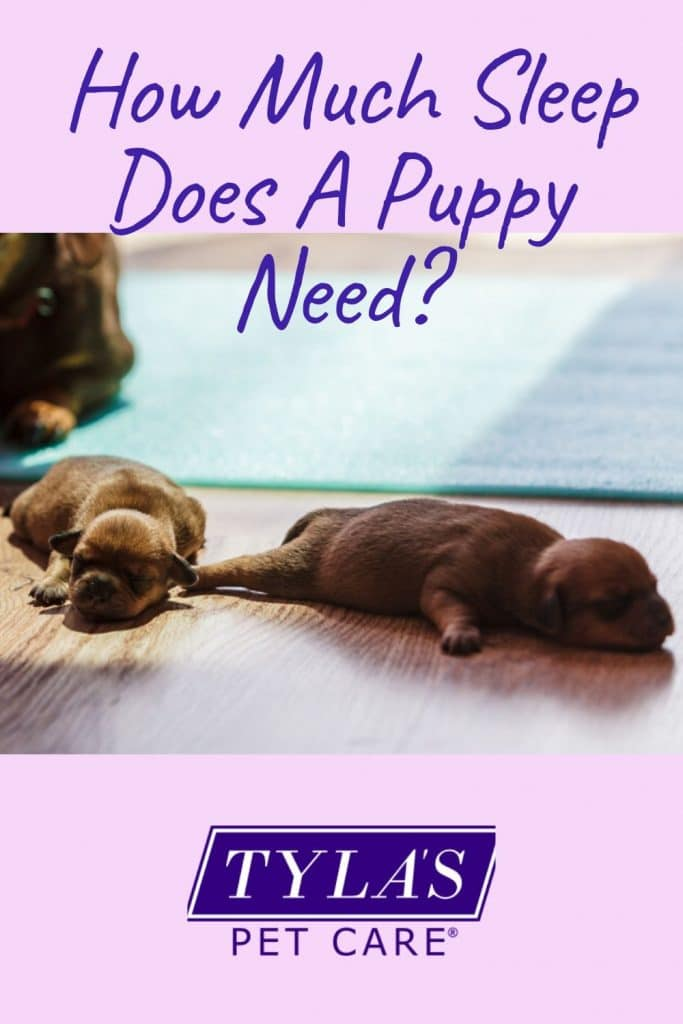 How Much Sleep Do Puppies Need