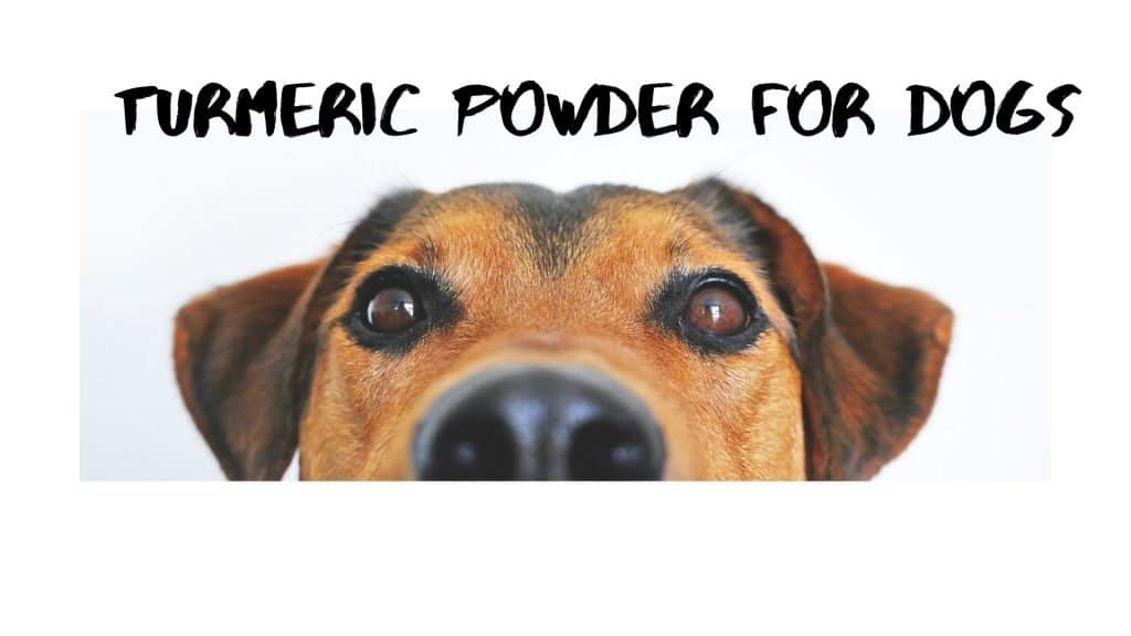 Turmeric Powder For Dogs