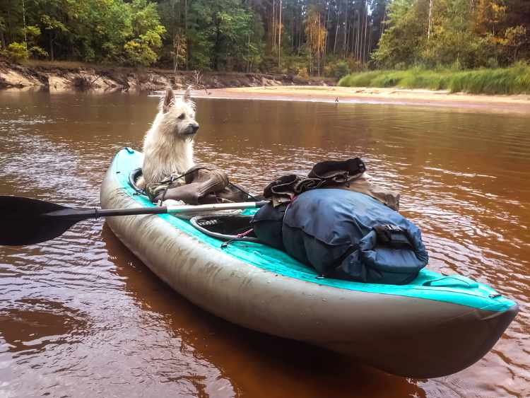 kayaking with a dog tips