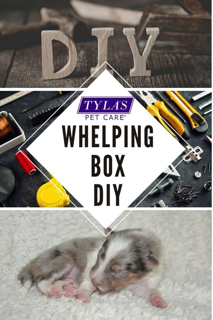 Whelping Box Buy Or DIY