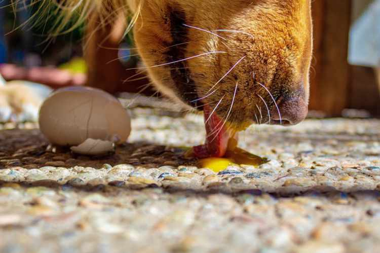 Are eggshells safe for dogs to eat