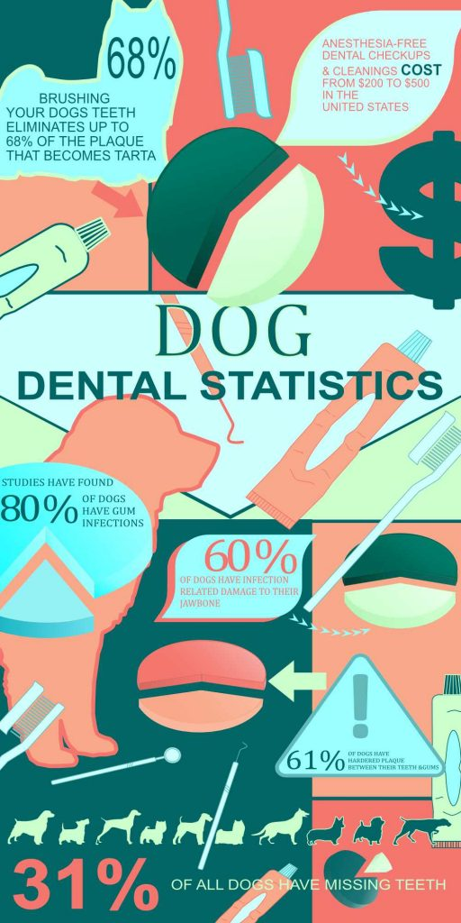Dog infographic for teeth