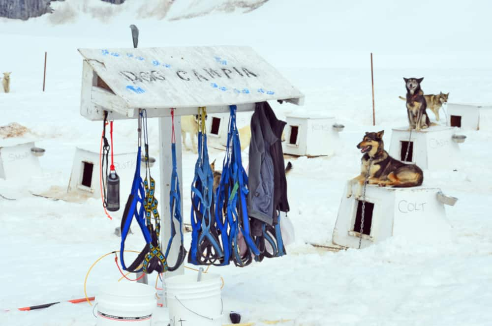 Dog Sledding Equipment