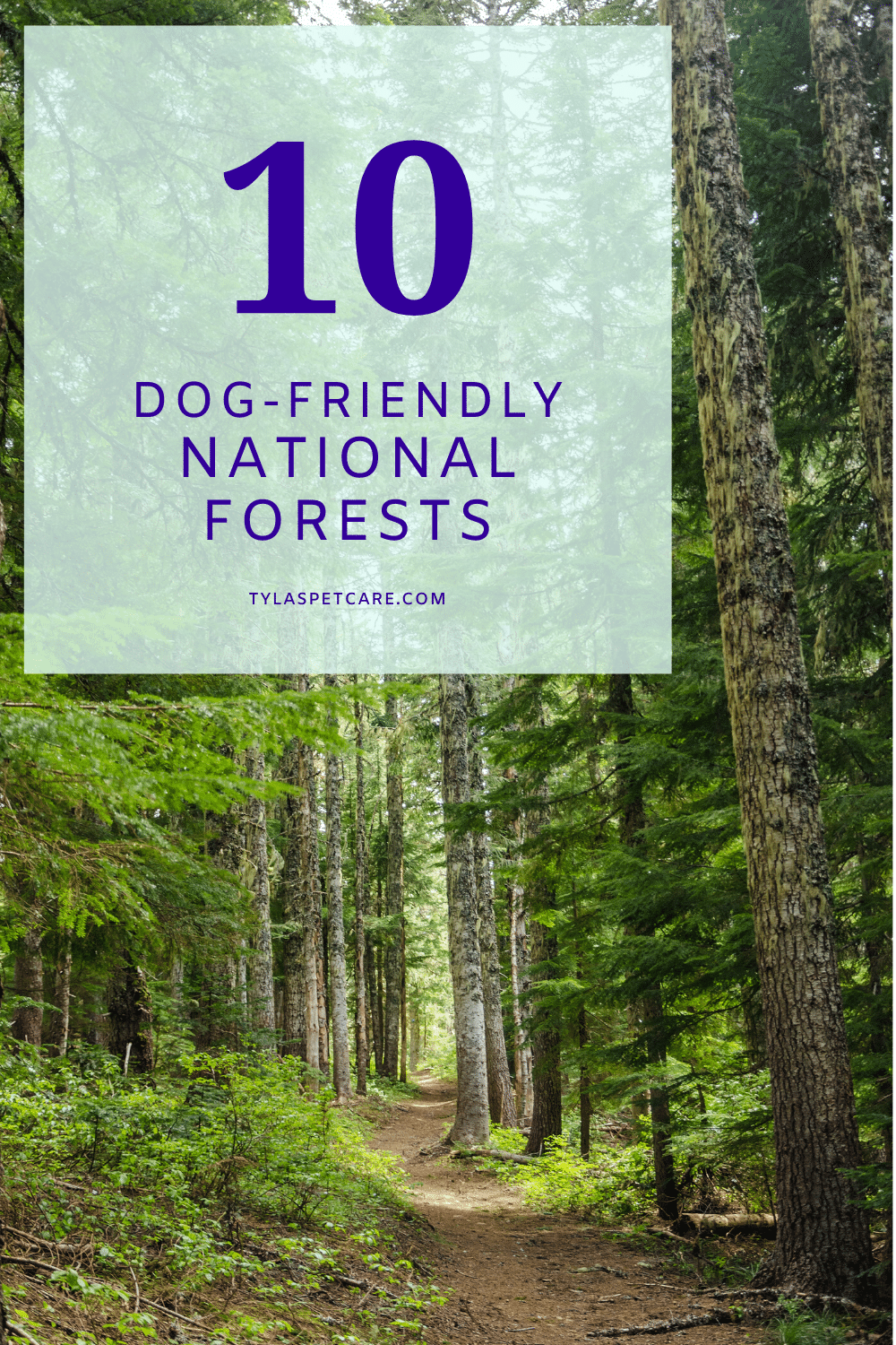 10 dog-friendly national forests