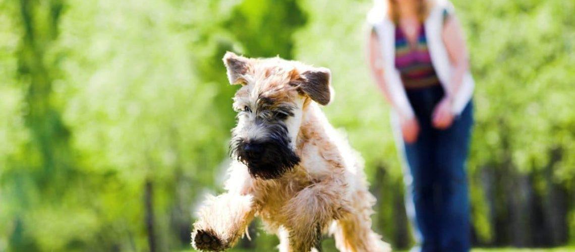dog turmeric supplements