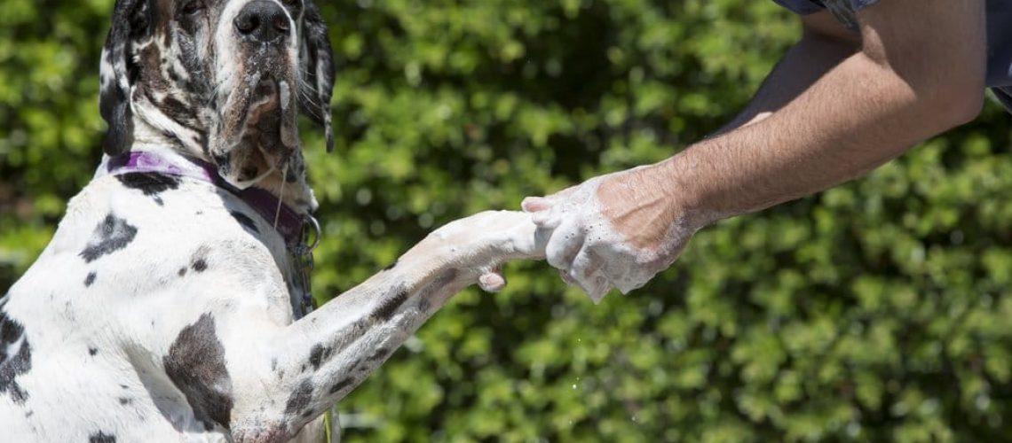 Washing paws, protection against coronavirus